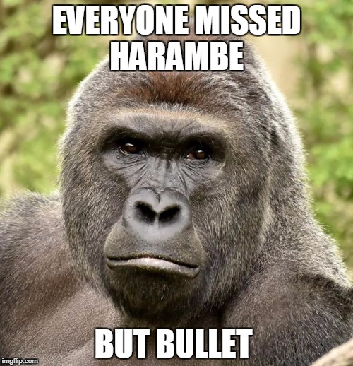 Har | EVERYONE MISSED HARAMBE BUT BULLET | image tagged in har | made w/ Imgflip meme maker