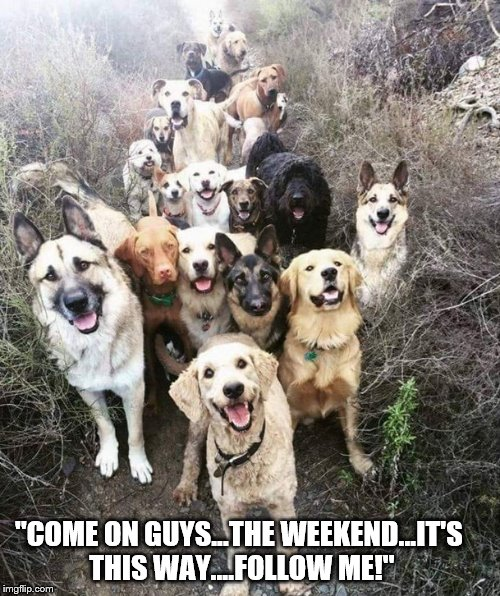 "Weekend Dogs | ""COME ON GUYS...THE WEEKEND...IT'S THIS WAY....FOLLOW ME!"" 