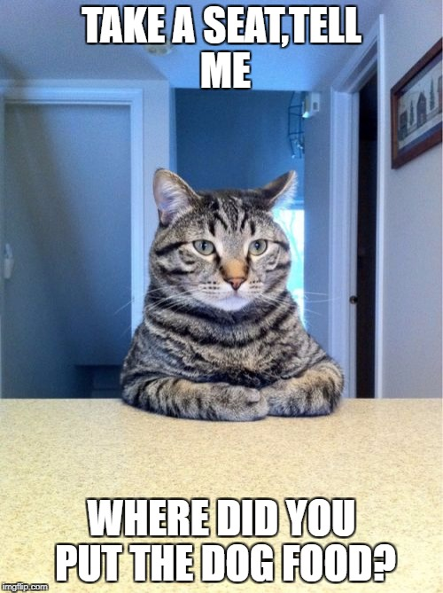 Take A Seat Cat Meme | TAKE A SEAT,TELL ME WHERE DID YOU PUT THE DOG FOOD? | image tagged in memes,take a seat cat | made w/ Imgflip meme maker
