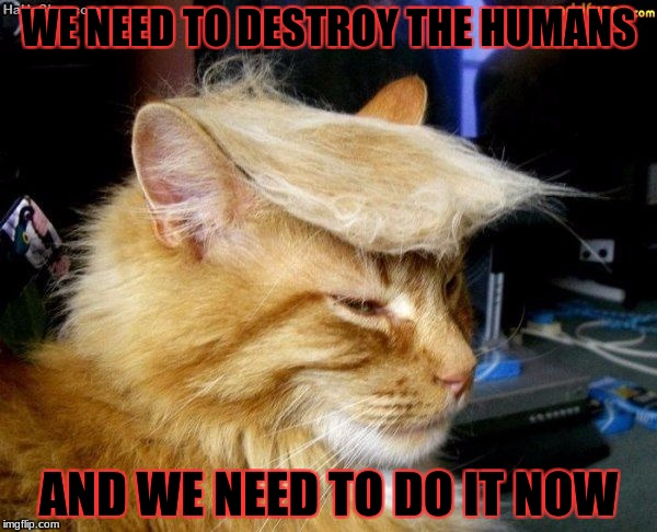 donald trump cat |  WE NEED TO DESTROY THE HUMANS; AND WE NEED TO DO IT NOW | image tagged in donald trump cat | made w/ Imgflip meme maker