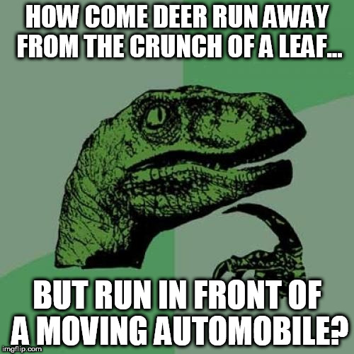 Philosoraptor Meme | HOW COME DEER RUN AWAY FROM THE CRUNCH OF A LEAF... BUT RUN IN FRONT OF A MOVING AUTOMOBILE? | image tagged in memes,philosoraptor | made w/ Imgflip meme maker
