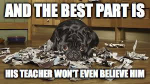 The dog ate my homework. | AND THE BEST PART IS HIS TEACHER WON'T EVEN BELIEVE HIM | image tagged in dog,dog ate homework,school,teacher | made w/ Imgflip meme maker