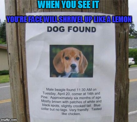 Those people should pray that Raydog doesn't find them. | WHEN YOU SEE IT YOU'RE FACE WILL SHRIVEL UP LIKE A LEMON | image tagged in um what,dog | made w/ Imgflip meme maker