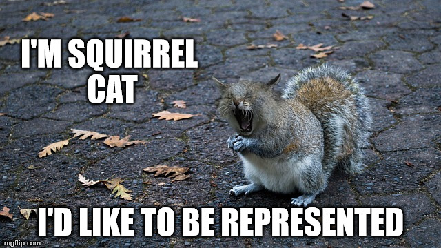 I'M SQUIRREL CAT I'D LIKE TO BE REPRESENTED | made w/ Imgflip meme maker