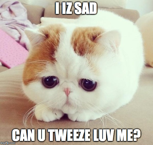 Sad Cat | I IZ SAD CAN U TWEEZE LUV ME? | image tagged in sad cat | made w/ Imgflip meme maker