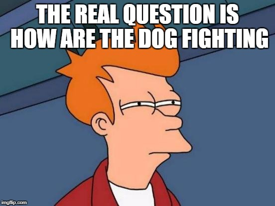 Futurama Fry Meme | THE REAL QUESTION IS HOW ARE THE DOG FIGHTING | image tagged in memes,futurama fry | made w/ Imgflip meme maker