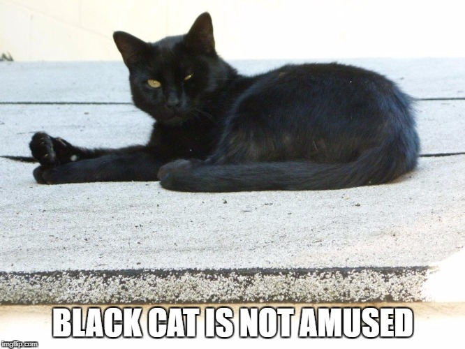 BLACK CAT IS NOT AMUSED | image tagged in black cat is not amused | made w/ Imgflip meme maker