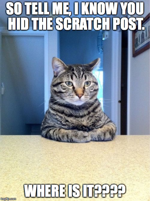 Another Day with Cat Boss | SO TELL ME, I KNOW YOU HID THE SCRATCH POST. WHERE IS IT???? | image tagged in memes,take a seat cat | made w/ Imgflip meme maker