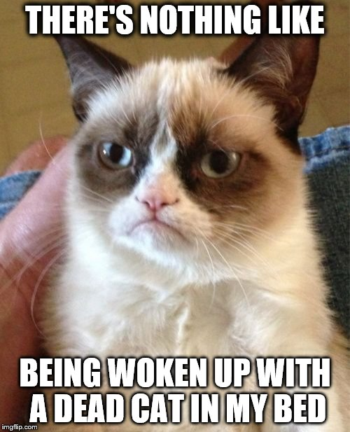 Grumpy Cat Meme | THERE'S NOTHING LIKE BEING WOKEN UP WITH A DEAD CAT IN MY BED | image tagged in memes,grumpy cat | made w/ Imgflip meme maker