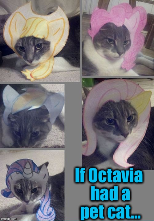 If Octavia had a pet cat... | made w/ Imgflip meme maker