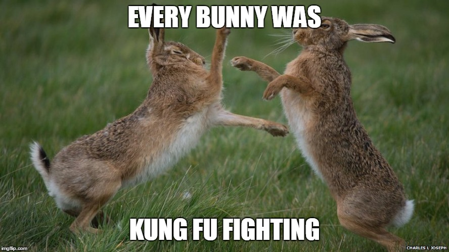 EVERY BUNNY WAS KUNG FU FIGHTING | made w/ Imgflip meme maker