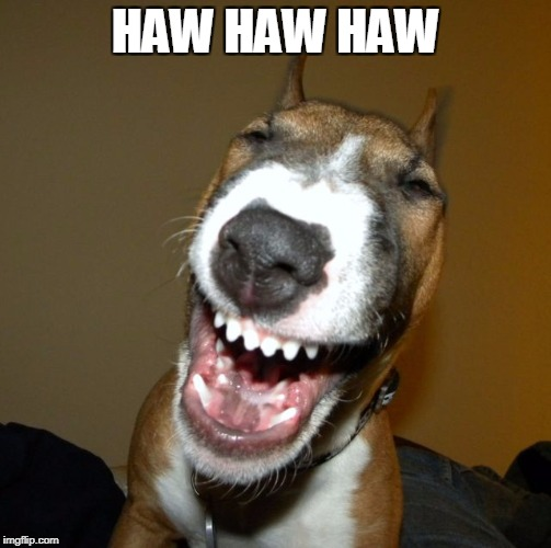 laughing dog | HAW HAW HAW | image tagged in laughing dog | made w/ Imgflip meme maker