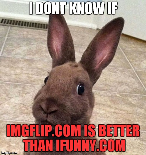 I DONT KNOW IF IMGFLIP.COM IS BETTER THAN IFUNNY.COM | image tagged in confuzed bunny | made w/ Imgflip meme maker