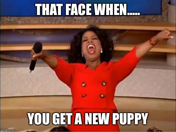 Oprah You Get A Meme | THAT FACE WHEN..... YOU GET A NEW PUPPY | image tagged in memes,oprah you get a | made w/ Imgflip meme maker
