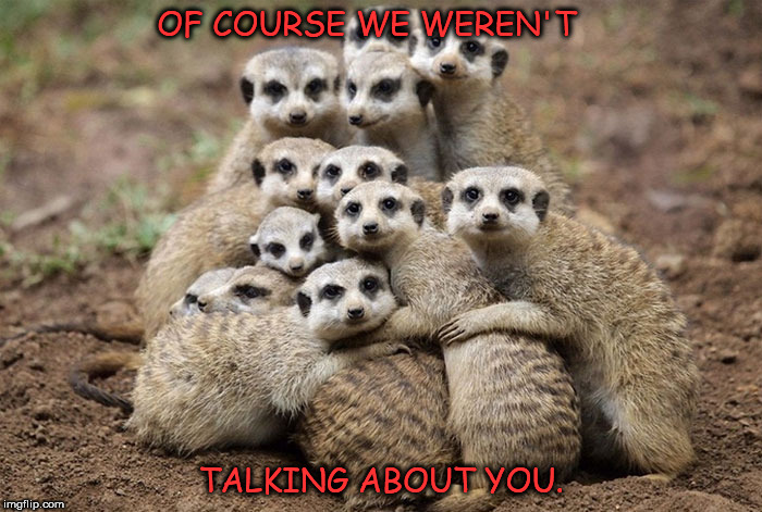 Animals Hugging | OF COURSE WE WEREN'T TALKING ABOUT YOU. | image tagged in animals hugging | made w/ Imgflip meme maker