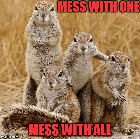 MESS WITH ONE MESS WITH ALL | image tagged in world animal day 2015 | made w/ Imgflip meme maker