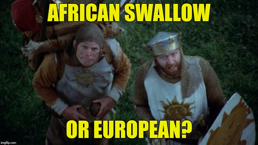 AFRICAN SWALLOW OR EUROPEAN? | made w/ Imgflip meme maker