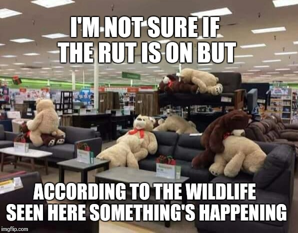 The rut is on | I'M NOT SURE IF THE RUT IS ON BUT ACCORDING TO THE WILDLIFE SEEN HERE SOMETHING'S HAPPENING | image tagged in bear,deer,imgflip,memes,hunter,hunting | made w/ Imgflip meme maker