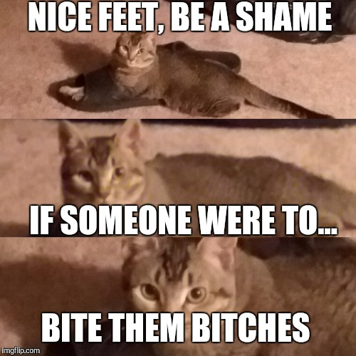 NICE FEET, BE A SHAME IF SOMEONE WERE TO... BITE THEM B**CHES | image tagged in bitchcat | made w/ Imgflip meme maker