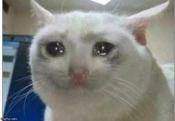D | made w/ Imgflip meme maker
