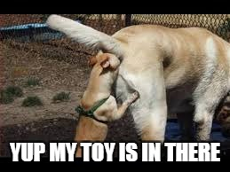 YUP MY TOY IS IN THERE | image tagged in dogs | made w/ Imgflip meme maker