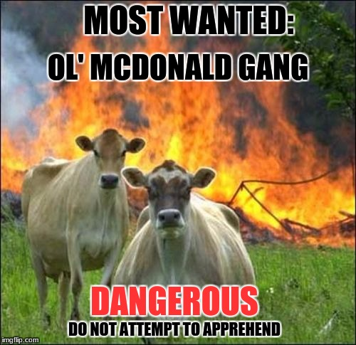 WHAT THE FARM!!!! | MOST WANTED: OL' MCDONALD GANG DANGEROUS DO NOT ATTEMPT TO APPREHEND | image tagged in memes,evil cows | made w/ Imgflip meme maker