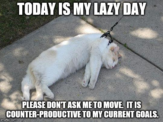 Lazy Cat | TODAY IS MY LAZY DAY PLEASE DON'T ASK ME TO MOVE.  IT IS COUNTER-PRODUCTIVE TO MY CURRENT GOALS. | image tagged in lazy cat | made w/ Imgflip meme maker