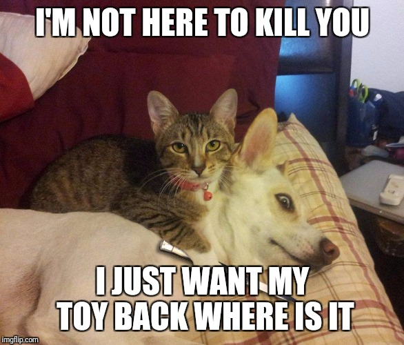 cat, dog & knife | I'M NOT HERE TO KILL YOU I JUST WANT MY TOY BACK WHERE IS IT | image tagged in cat,dog  knife | made w/ Imgflip meme maker