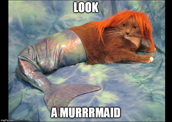 LOOK A MURRRMAID | made w/ Imgflip meme maker