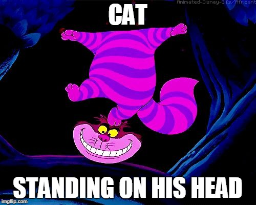 CAT STANDING ON HIS HEAD | image tagged in cheshirecat | made w/ Imgflip meme maker