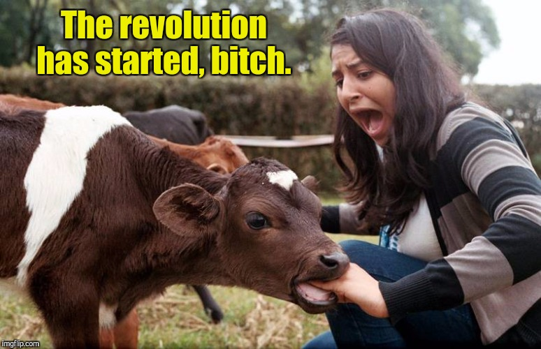 The revolution has started, b**ch. | made w/ Imgflip meme maker