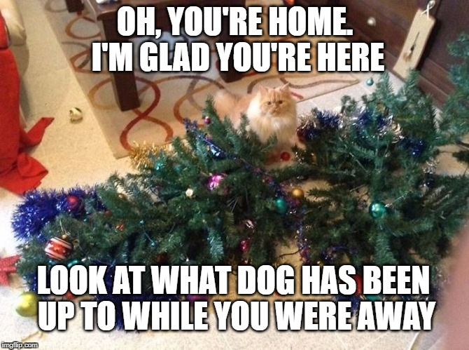 Wasn't Me | OH, YOU'RE HOME. I'M GLAD YOU'RE HERE LOOK AT WHAT DOG HAS BEEN UP TO WHILE YOU WERE AWAY | image tagged in cat,cats,christmas tree,christmas,christmas memes,dog | made w/ Imgflip meme maker