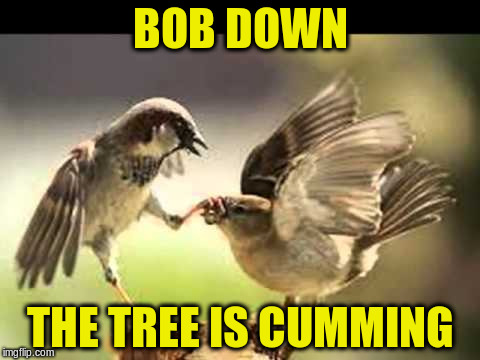 BOB DOWN THE TREE IS CUMMING | made w/ Imgflip meme maker