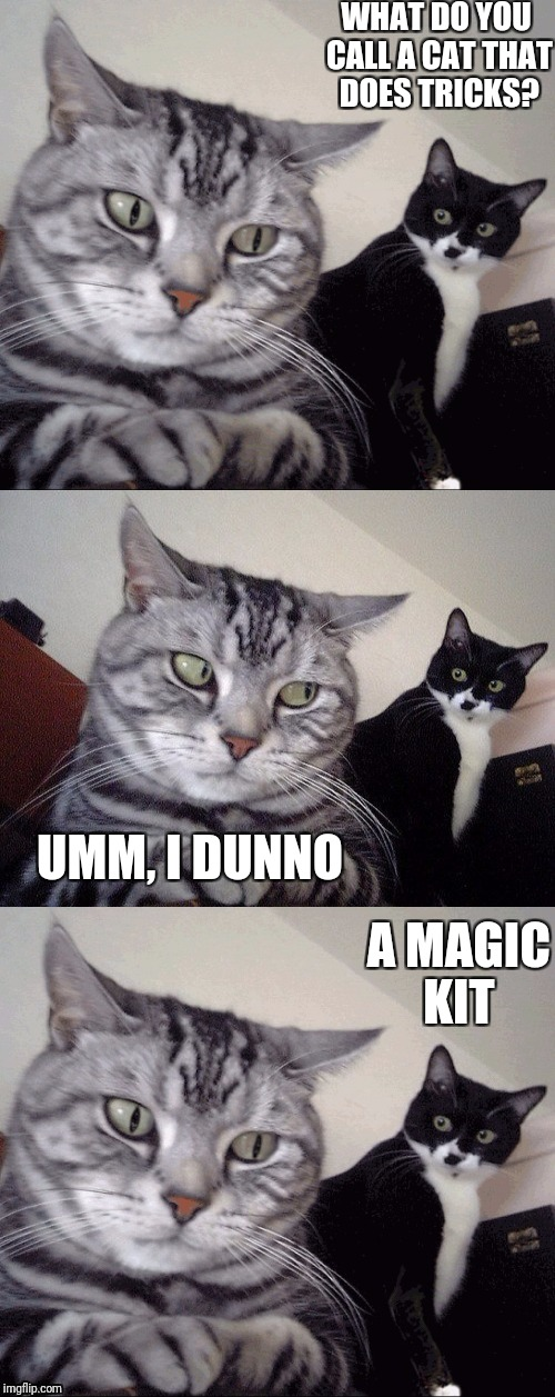Bad Joke Cat | WHAT DO YOU CALL A CAT THAT DOES TRICKS? A MAGIC KIT UMM, I DUNNO | image tagged in memes,cats,bad joke cat | made w/ Imgflip meme maker