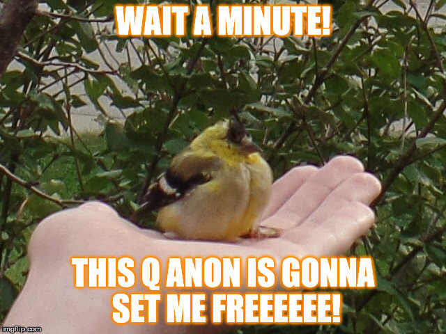 tweets for freedom | WAIT A MINUTE! THIS Q ANON IS GONNA SET ME FREEEEEE! | image tagged in bird,q anon,free,freedom | made w/ Imgflip meme maker