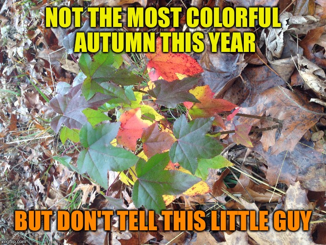 NOT THE MOST COLORFUL AUTUMN THIS YEAR BUT DON'T TELL THIS LITTLE GUY | made w/ Imgflip meme maker