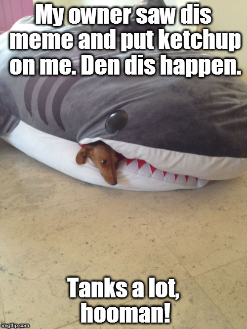 Dachshund In Pillow | My owner saw dis meme and put ketchup on me. Den dis happen. Tanks a lot, hooman! | image tagged in dachshund in pillow | made w/ Imgflip meme maker