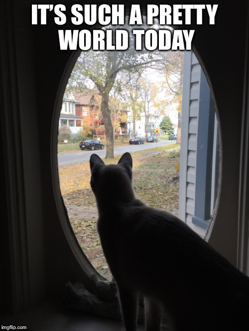 IT'S SUCH A PRETTY WORLD TODAY | image tagged in mornings | made w/ Imgflip meme maker