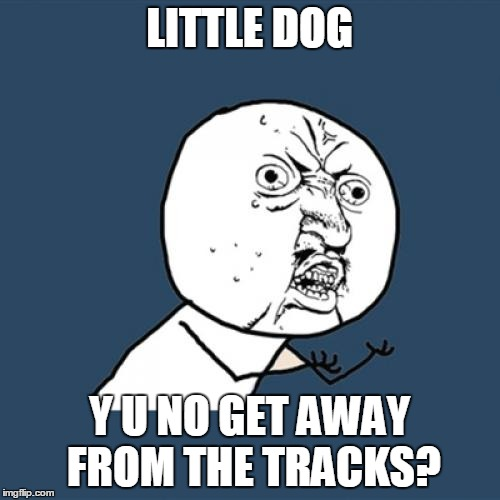 Y U No Meme | LITTLE DOG Y U NO GET AWAY FROM THE TRACKS? | image tagged in memes,y u no | made w/ Imgflip meme maker