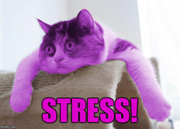RayCat Stare | STRESS! | image tagged in raycat stare | made w/ Imgflip meme maker