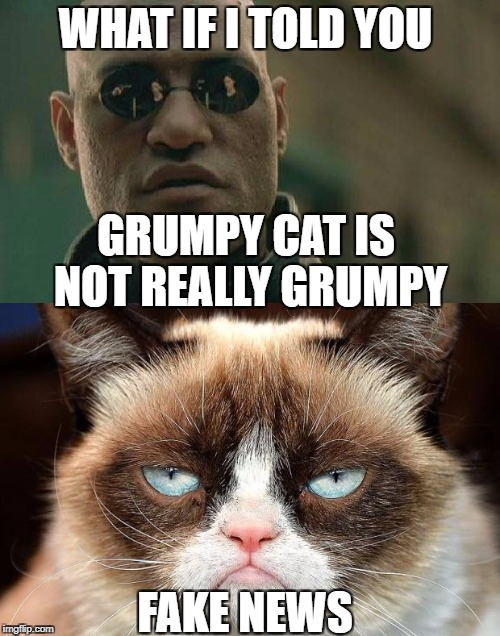 WHAT IF I TOLD YOU GRUMPY CAT IS NOT REALLY GRUMPY FAKE NEWS | image tagged in fake news | made w/ Imgflip meme maker