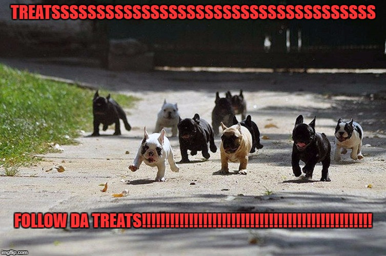 They know when there are treats around, ALL dogs know | TREATSSSSSSSSSSSSSSSSSSSSSSSSSSSSSSSSSSSS FOLLOW DA TREATS!!!!!!!!!!!!!!!!!!!!!!!!!!!!!!!!!!!!!!!!!!!!!!!!! | image tagged in french bulldog charge | made w/ Imgflip meme maker