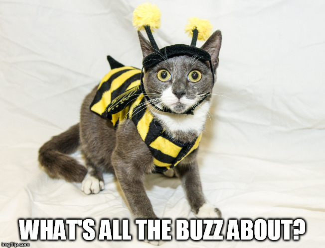 WHAT'S ALL THE BUZZ ABOUT? | made w/ Imgflip meme maker