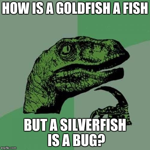 I suppose a bronzefish is a bird? | HOW IS A GOLDFISH A FISH BUT A SILVERFISH IS A BUG? | image tagged in memes,philosoraptor,goldfish,silverfish,wtf,i don't get it | made w/ Imgflip meme maker