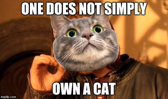 One Does Not Simply Meme | ONE DOES NOT SIMPLY OWN A CAT | image tagged in memes,one does not simply | made w/ Imgflip meme maker