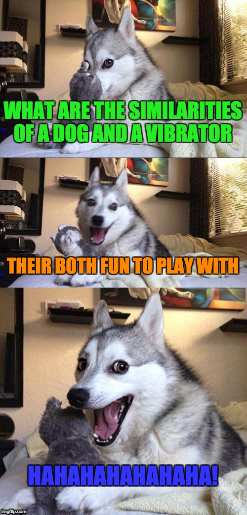 Bad Pun Dog Meme |  WHAT ARE THE SIMILARITIES OF A DOG AND A VIBRATOR; THEIR BOTH FUN TO PLAY WITH; HAHAHAHAHAHAHA! | image tagged in memes,bad pun dog | made w/ Imgflip meme maker