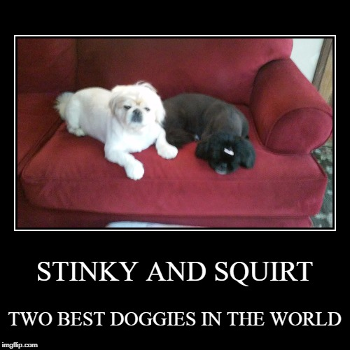 STINKY AND SQUIRT | TWO BEST DOGGIES IN THE WORLD | image tagged in funny,demotivationals | made w/ Imgflip demotivational maker