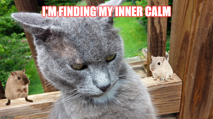 Cat Rage | I'M FINDING MY INNER CALM | image tagged in cat rage | made w/ Imgflip meme maker
