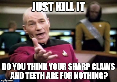 Picard Wtf Meme | JUST KILL IT DO YOU THINK YOUR SHARP CLAWS AND TEETH ARE FOR NOTHING? | image tagged in memes,picard wtf | made w/ Imgflip meme maker