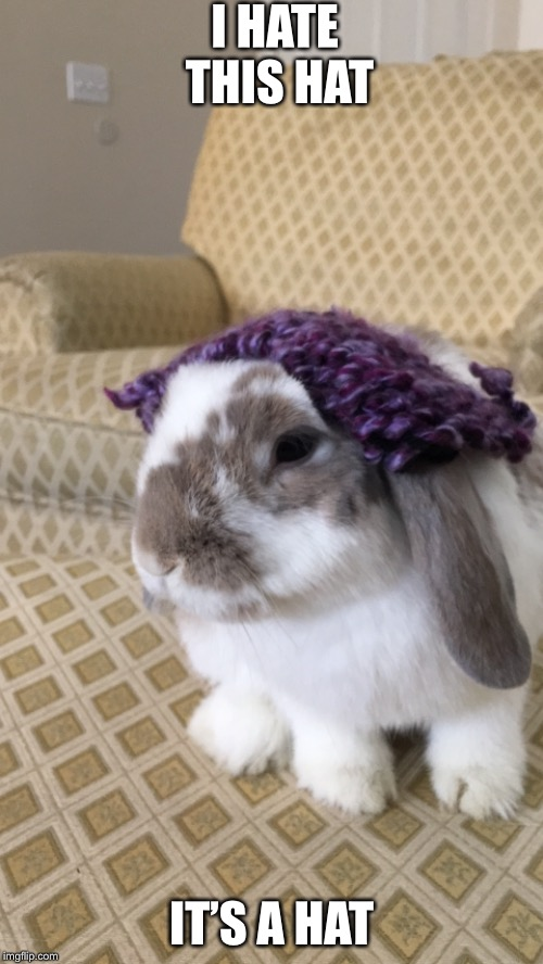 My Rabbit | I HATE THIS HAT IT'S A HAT | image tagged in cute,adorable,bunny with a hat | made w/ Imgflip meme maker